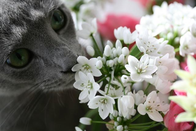 花とシオン