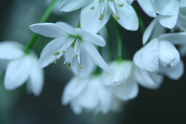 名も知らぬ花1