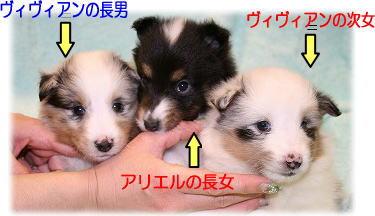 アリ&ヴィヴィっ仔紹介1