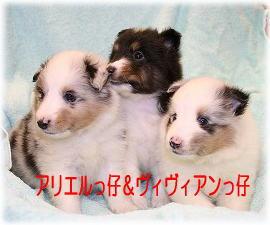 アリ&ヴィヴィっ仔紹介2