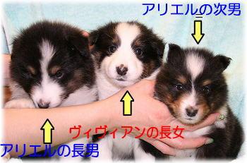 アリ&ヴィヴィっ仔紹介3