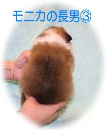 モニカ長男③