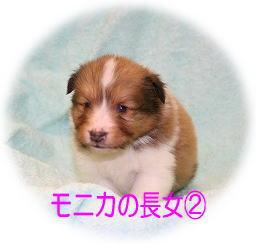 モニカ長女②