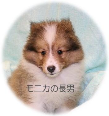 モニカ長男・顔