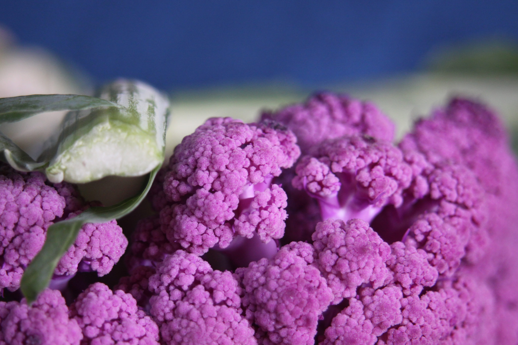 紫のブロッコリー2