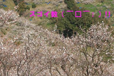 minabe8.jpg