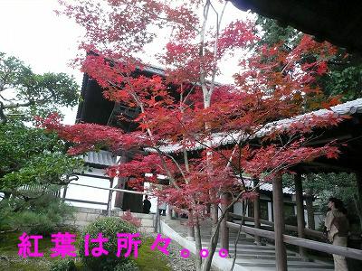 toufukuji7.jpg