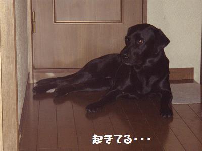 P9036612-8.jpg