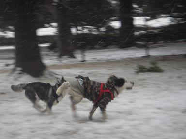 2008.2.3雪