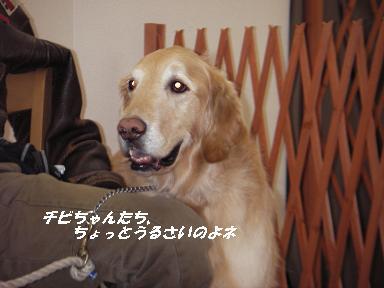 2008.2.6 ドッグカフェ