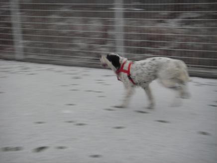 small 2008.2.9 雪の日2 dogdept 020