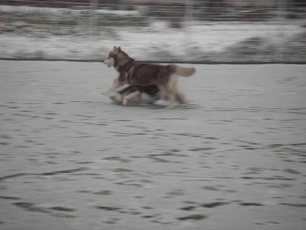 small 2008.2.9 雪の日2 dogdept 021