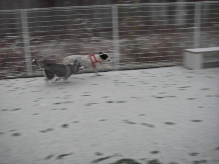 small 2008.2.9 雪の日2 dogdept 025