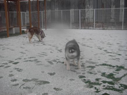 small 2008.2.9 雪の日2 dogdept 032