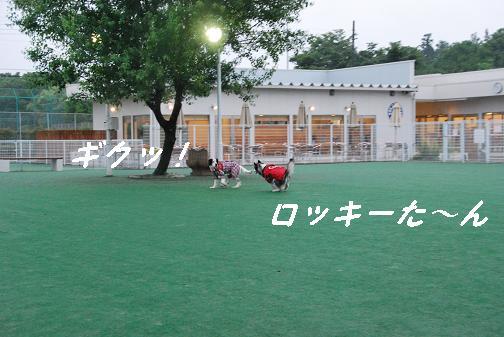 2008.05.10D.D 310