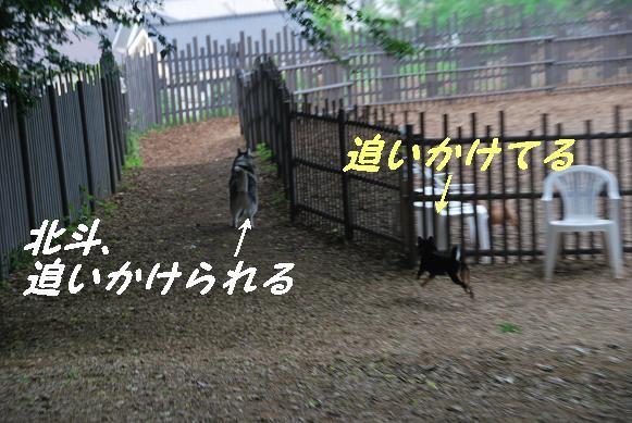 DSC_0074_01