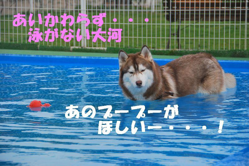 あいかわらず泳がない大河 DSC_0013