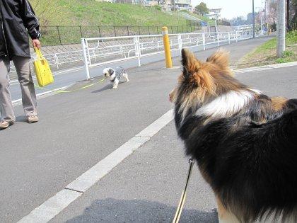 スイカは後10歩歩いたところでつよ♪(スイカ割り?? ^^;)
