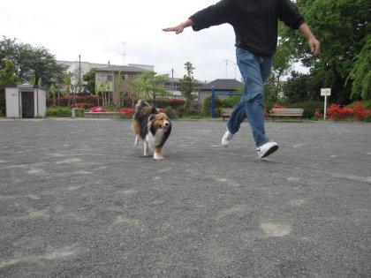 いつもの公園でつぅ!