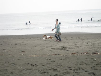海の匂いが大好きですの~興奮して走りまわるですの~♪