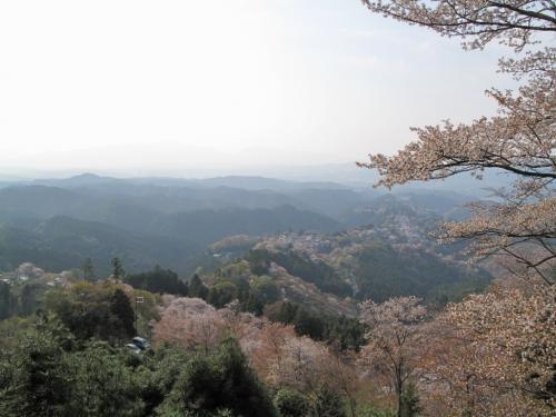 吉野2009_04_12