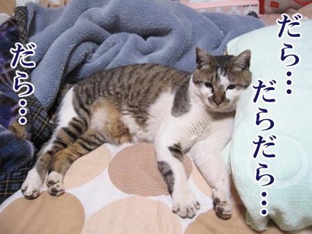 20080611_01.jpg