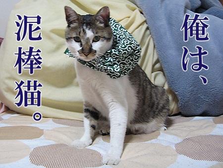 20080620_05.jpg