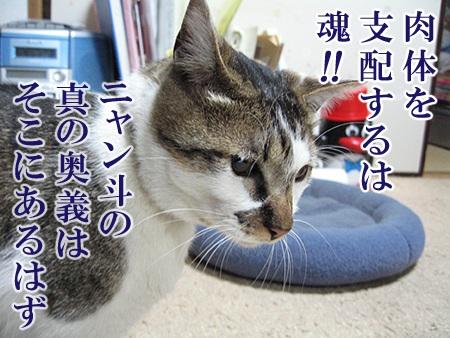 20080701_02.jpg