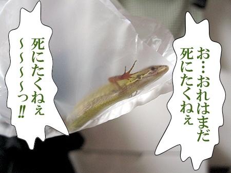 20080807_04.jpg