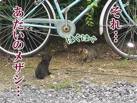 20080814_02.jpg