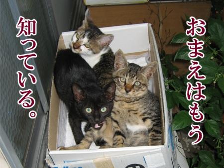 20080814_03.jpg