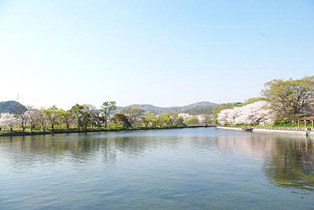 hanami14.jpg