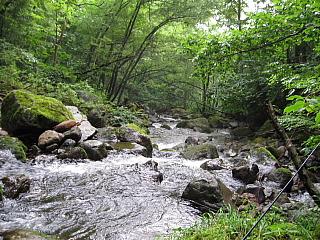 初日の渓流