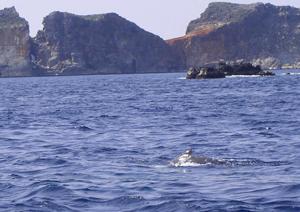 小倉クジラ2