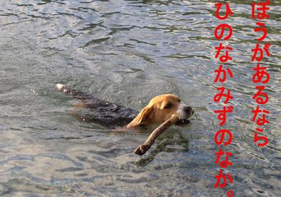 4泳ぐマルのコピー