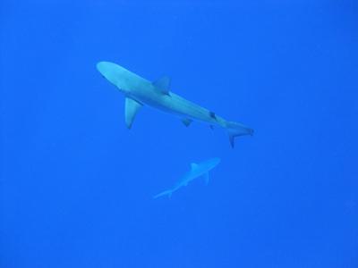 サメ0728