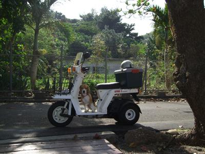 マルバイク0121