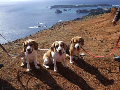 犬3笑顔2