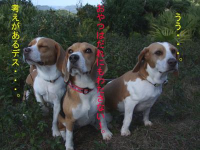 犬3草地2のコピー