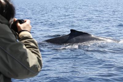 sさんとクジラ