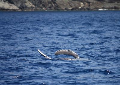 子クジラお腹2