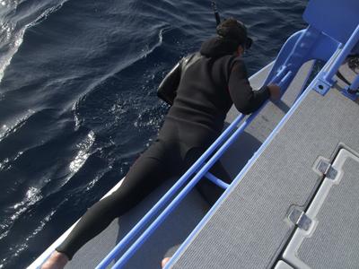クジラ見方