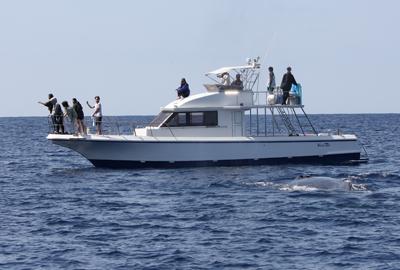 船とクジラ2