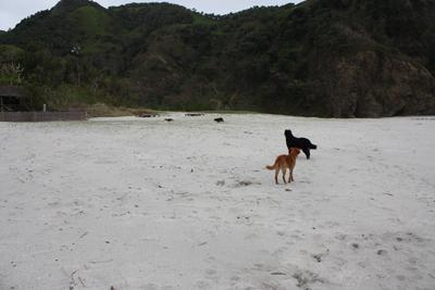 犬03241