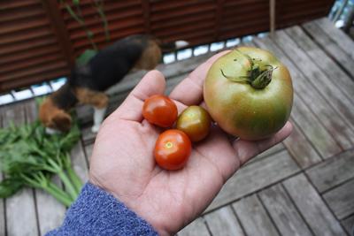 トマト0331
