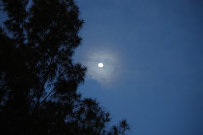 月マオウ0406