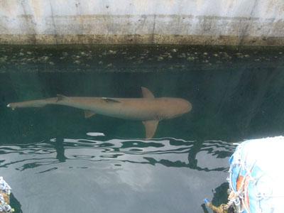 置場サメ0608