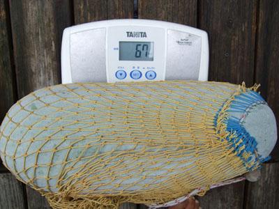 冬瓜6.7キロ