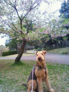 葉桜とジャック1