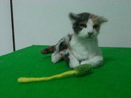 羊毛@猫2-1